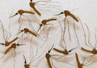 """中国用军事雷达向蚊子""""宣战"""" 新技术或可用于"""