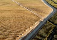 美国记者跟踪报道加州农业重建 夫妇如何建造奇
