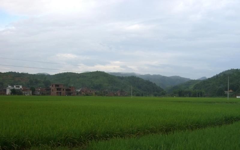 从山顶眺望村子,绿油油的一片,凉风拂面,稻浪一波波朝脚下涌来,很美……