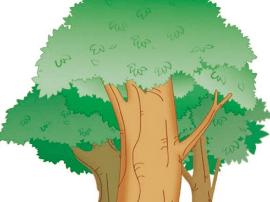 广西:保护古树名木 砍古树最高罚50万元
