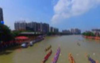 东莞这个镇的人今年可以在公园里看龙舟 不用暴晒了