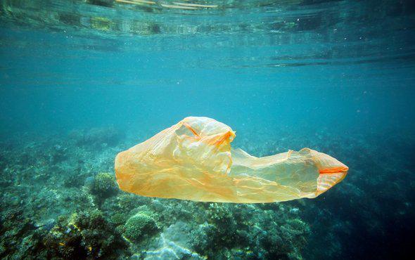 海龟误吞 毒死珊瑚:乱扔塑料袋 瞧人类干的好事