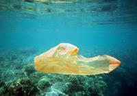 """海龟误吞 毒死珊瑚:乱扔塑料袋 瞧人类干的""""好事"""