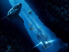 北美高口碑《鲨海》超前点映 网易邀你免费抢鲜看!