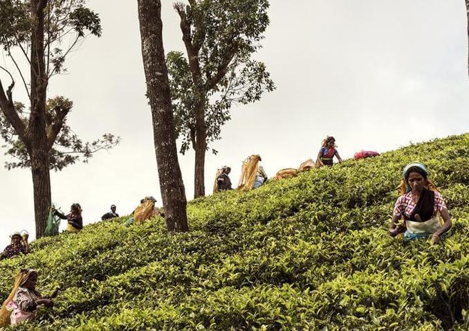 斯里兰卡穿梭古城丛林