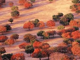 中国这6万亩枫林已美成天堂 比日本红叶美100倍