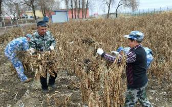 博乐教育矫治局公司支部开展蔬菜种植前准备工作