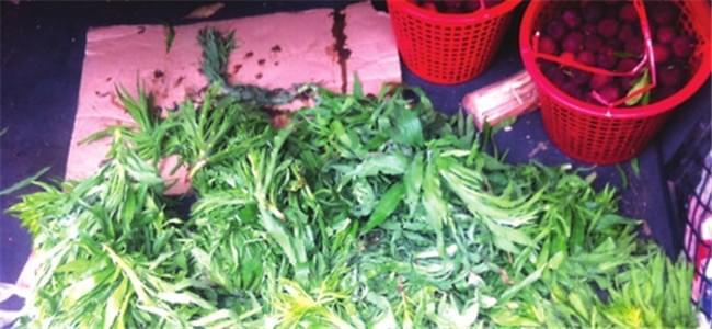 一筐杨梅25元实在便宜 市民买回发现半筐都是草
