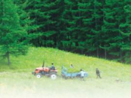 中国启动大规模国土绿化行动