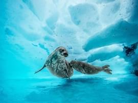 深入南极冰层 探访神秘国度