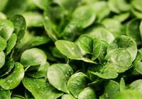 松下苏州建蔬菜工厂:今年3月正式卖菜 计划月产9
