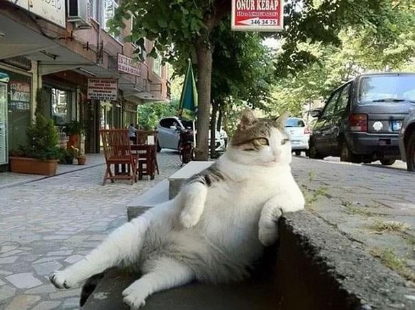 网红慵懒猫去世后 土耳其人专门设立铜像纪念它