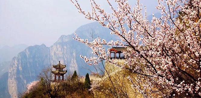 云台山赏十里桃花  一睹春之繁华