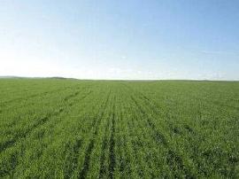 重要农业气象信息:长春市大部分地区墒情适宜