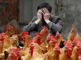 珠海感染禽流感风险增高!专家提醒,别买活禽!