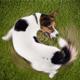 狗狗为何总是追尾巴打圈?