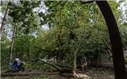莫斯科遭遇暴风雨11人死亡