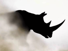 """人民日报首次提及的""""灰犀牛""""究竟是什么?"""