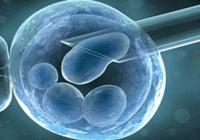 韩国科学家:我们想快点重获研究人类胚胎资格