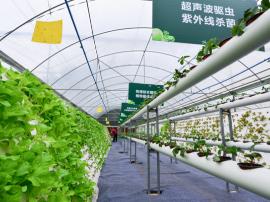 重庆首家鱼菜共生新生鲜蔬菜上市