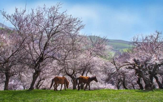 春分迎升温 乌鲁木齐周末最高气温达20℃