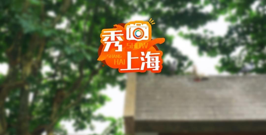 杨浦公园喂鸽区提供现杀现卖 鸽屋现已关