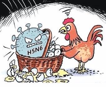 韩国确认在养鸭场中发现H5N6禽流感 警戒等级升高