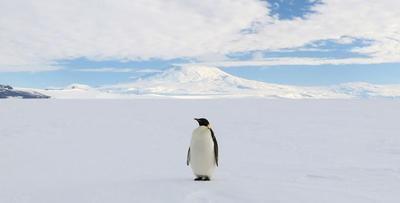 """看够了那些繁华都市?来一场""""南极之旅""""吧!"""