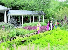 两节将至 到南寨公园体验中草药文化之旅