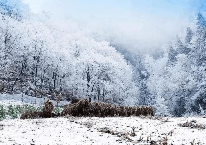 这个冬天 最不能错过的城口雪景 非赏不可!