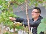 <b>延庆村民的世葡园</b>