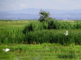 新疆库鲁斯台草原湿地好生态引来候鸟飞舞