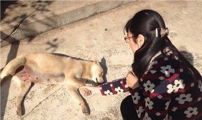 @东莞人 狗年要大吉,但与狗接触千万别大意!