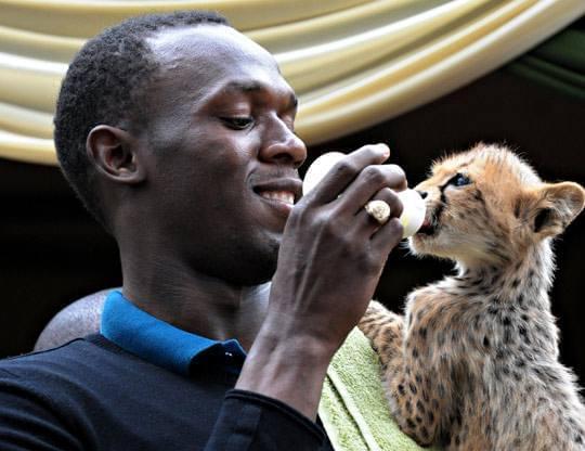 博尔特与自己收养的猎豹