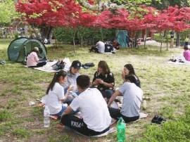 中山公园樱花凋落 五一悠闲假期明年再见