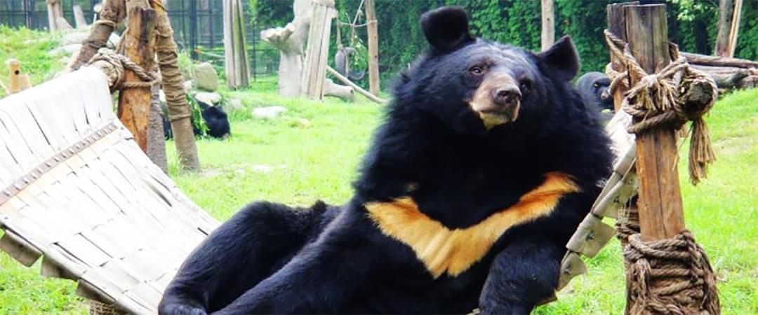 黑熊宝宝出来晒太阳啦 一个大滚萌翻人类
