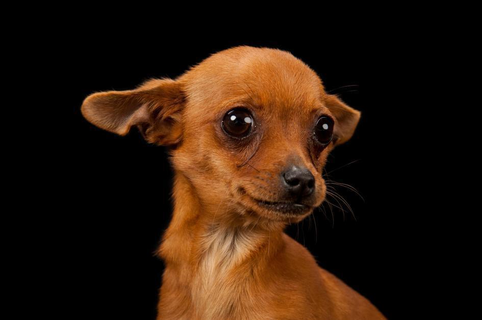 如果主人死了 狗会吃掉主人吗?有人怀疑是猫干的