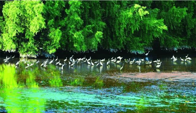 带你去看惠州大亚湾红树林国家城市湿地公园
