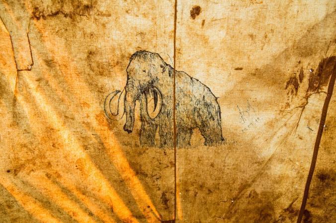 复活猛犸象有戏 但有人担心亚洲象是否愿意杂交