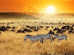 肯尼亚现纯白色长颈鹿,宛如电影里的特效画面