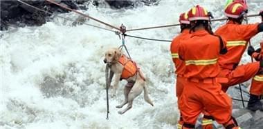 四川山体垮塌 消防用绳桥运送搜救犬