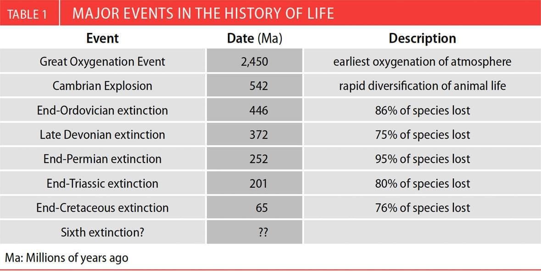 人类会再面临物种大灭绝?中眉山沉积岩或有证据