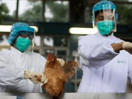 河北新增4例H7N9病例 专家建议避免接触活禽