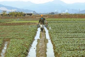 明年起,佛山南海基本农田一年补800元/亩