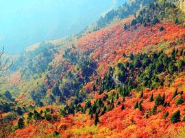 石家庄红叶最佳观赏期发布 去这些地方赏红