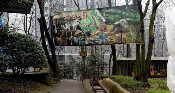 """重庆""""袖珍动物园""""10块看一次"""