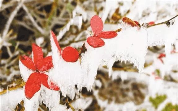 2017年入冬第一场雪!重庆这些地方 适合滑雪看雪景!