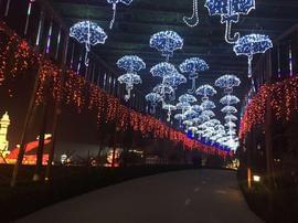 合川大型实景灯会 主播带你体验梦幻夜