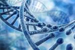 3000个基因就能制造出一个完整的人类?