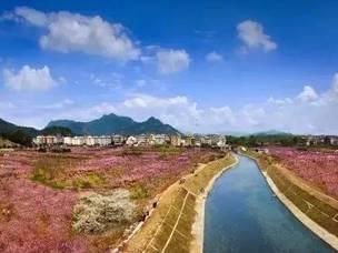 台州花海如约而至,这个小长假赏花约起!